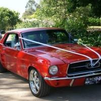 Mustangmad