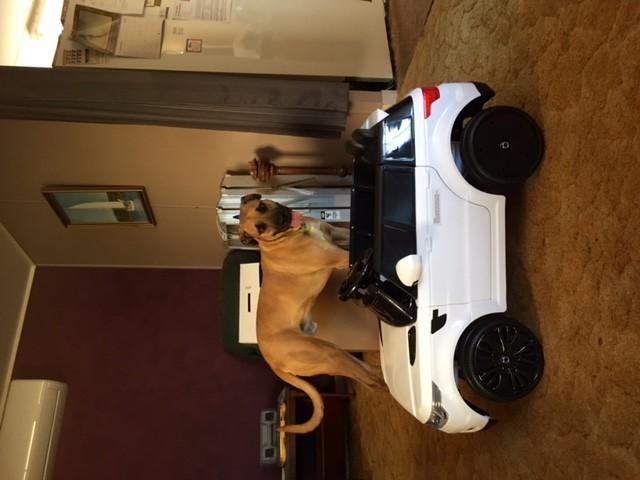 MotoX,bike,electric,madmuz,vehicles,dirt