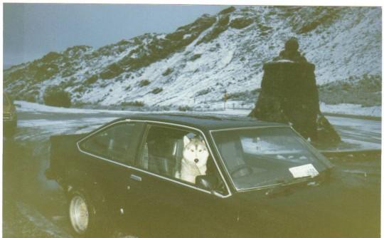 1977 Holden LX SS L31